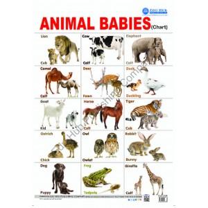 Animals Babies Chart